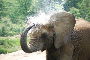 c23-elephant.JPG