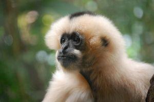 c64-monkey.JPG