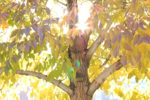 sun through tree.jpg